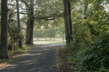 Treelined driveway welcomes you to Tred Avon